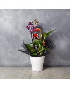 Orchid & Anthurium Gift Set, floral gift baskets, gift baskets, potted plant gift baskets