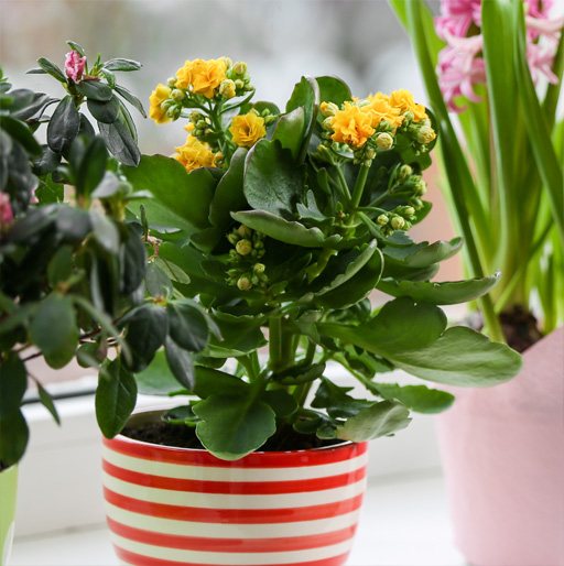 Our Potted Plant Gift Ideas for Mom & Dad
