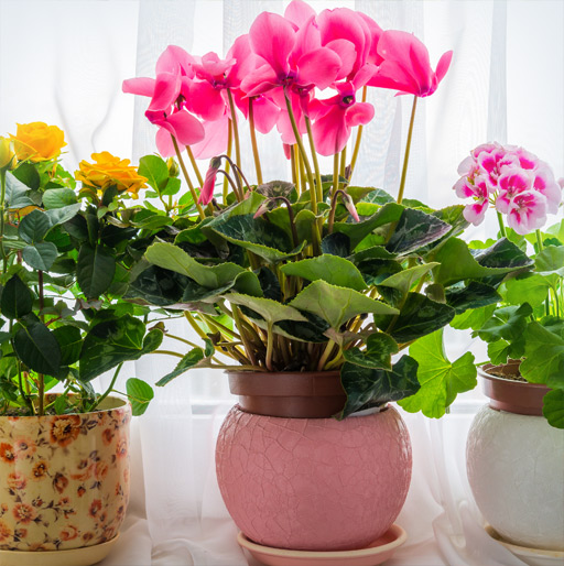 Our Potted Plant Gift Ideas for Friends